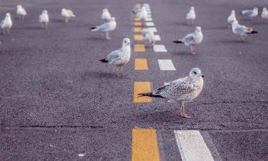 scattered-birds